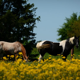 Beauties in the flowers by Brenda Shoemake - Animals Horses
