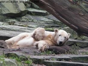 Photo: Ein entspannter Knut auf seinem Jutesack :-)