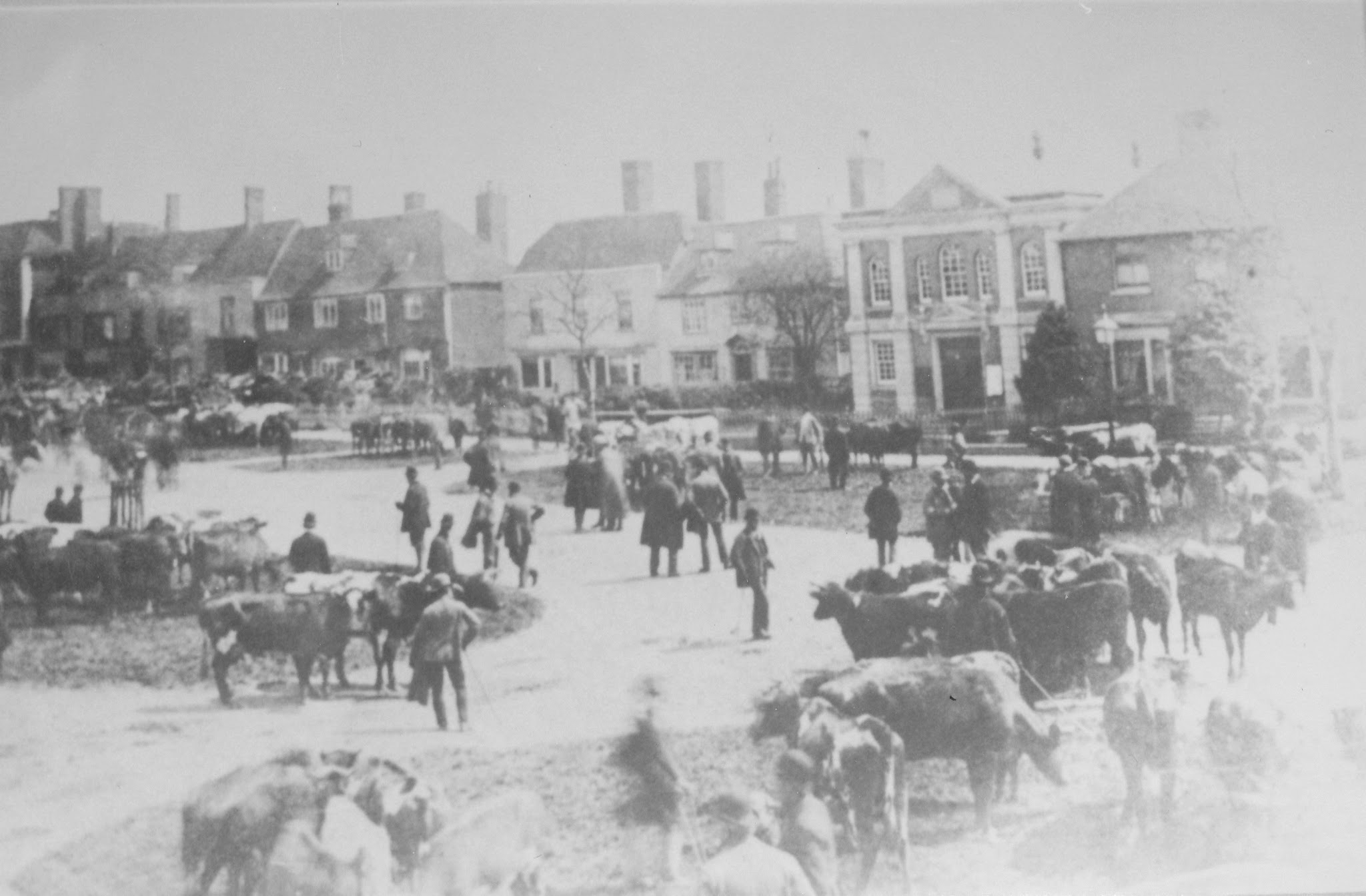 Tenterden Archive photos - Tenterden Market – Cattle and Sheep