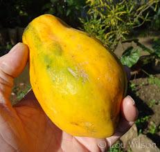 Photo: Papaya Sri Lanka
