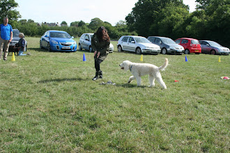 Photo: DogBasics Fun Day 2013 - Kelly and Alan Labradoodle in the Contact Slalom