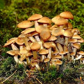 Surpopulation by Gérard CHATENET - Nature Up Close Mushrooms & Fungi
