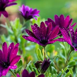 by Luz UK - Flowers Flower Gardens