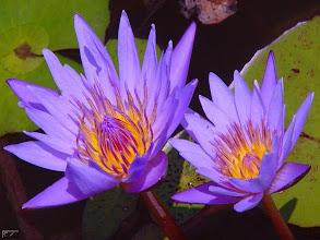 Fotografija: terapia purple 40