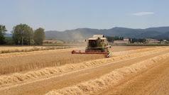 Cosechando cereales en la comarca de Los Vélez
