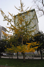 Photo: Xintgo Bilova En outono