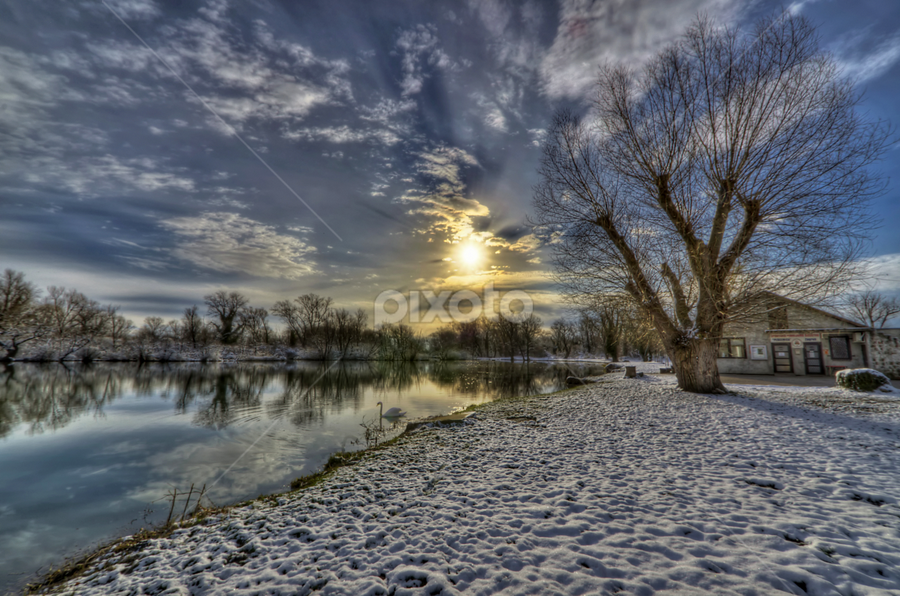 Sunny winter morning by Boris Frković - Landscapes Weather ( winter, tree, sunny, snow, swan, lake, house, morning, sun )