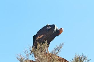 Photo: Zion Angels Landing Hike 52