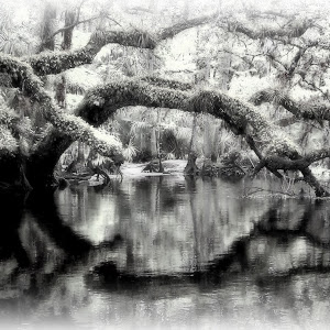 bw fisheating creek.jpg