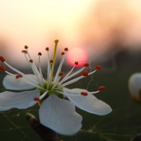 by Valentina Masten - Flowers Single Flower