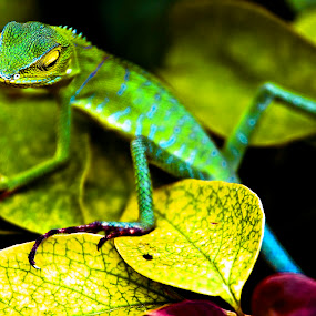 by Agung Cahyono - Animals Reptiles
