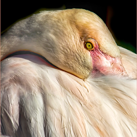 0772-AB-0723-03-16 by Fred Herring - Animals Birds