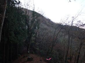 八葉山への登りに