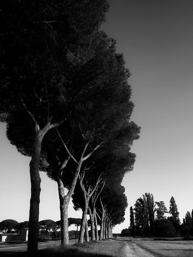 Parco di San Rossore di Danni