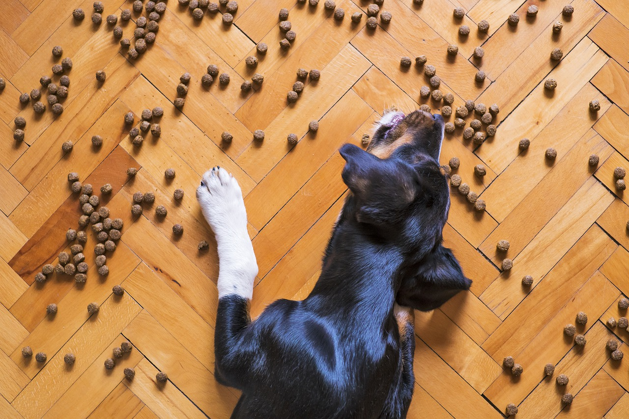 Use food dispensing toys and hand feeding to distract your dog