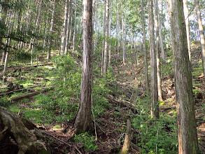 植林の斜面を登る