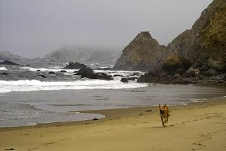 Photo: McClure's Beach