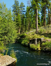 Photo: Narrowest spot on the Metolius River, Canyon Creek confluence, Camp Sherman, OR