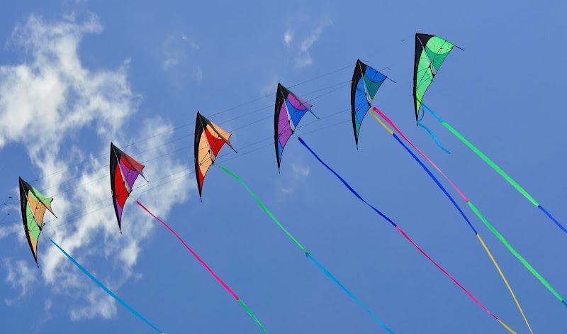 Simmetrie nel vento di cigno