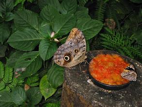 Photo: Moth bigger than your hand