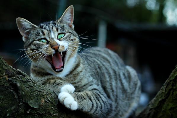 Miaooo di PhotoBySaraPesucci