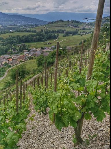Echalas - Domaine Yves Girard-Madoux - Vignoble de la Pierre - Vin de Savoie