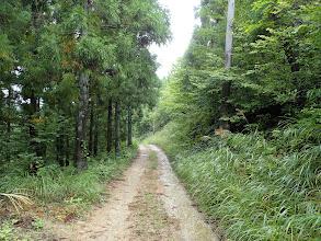 林道を降りる