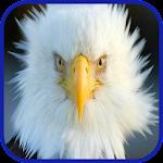 Eagle Wallpaper HD Icon