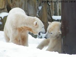 Photo: Aufstehen, Gianna, Knut will spielen ;-)