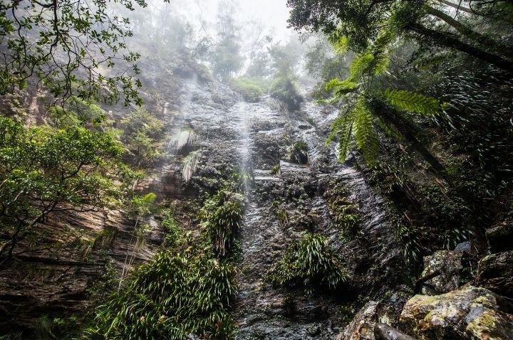 National Park Hikes in Brisbane