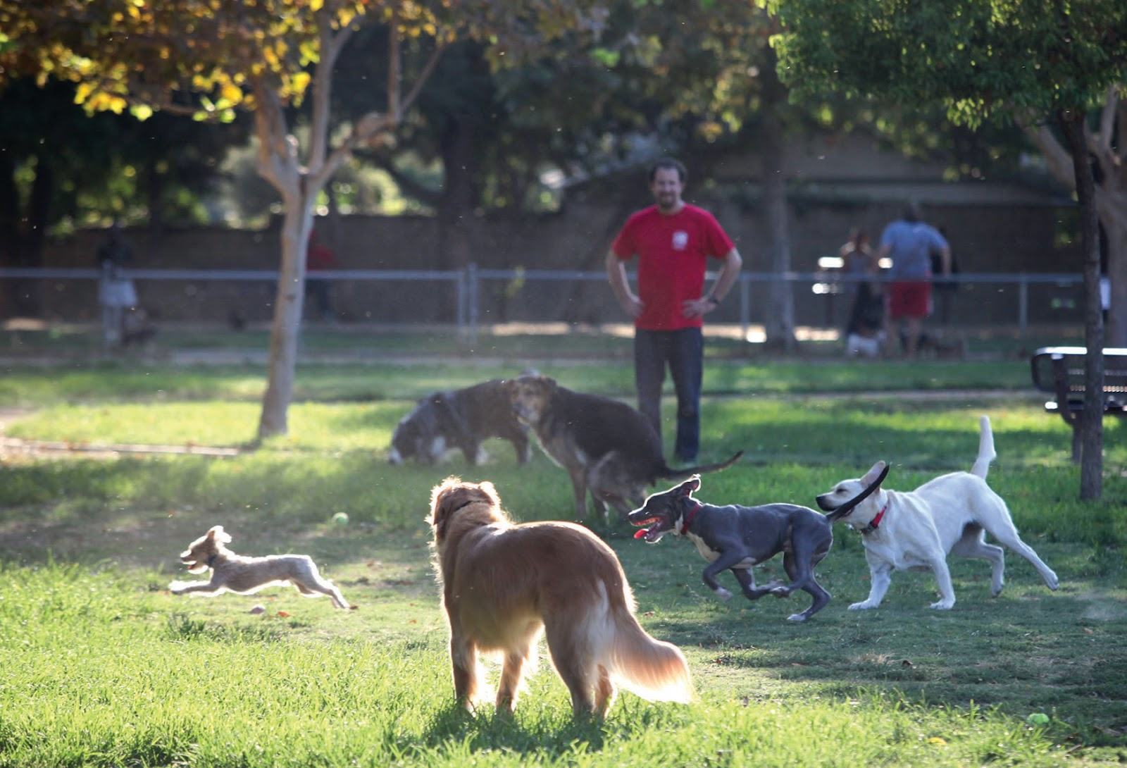 A group of dogs playing at the Claremont Pooch Park