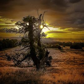 by Anthony Doyle - Nature Up Close Trees & Bushes