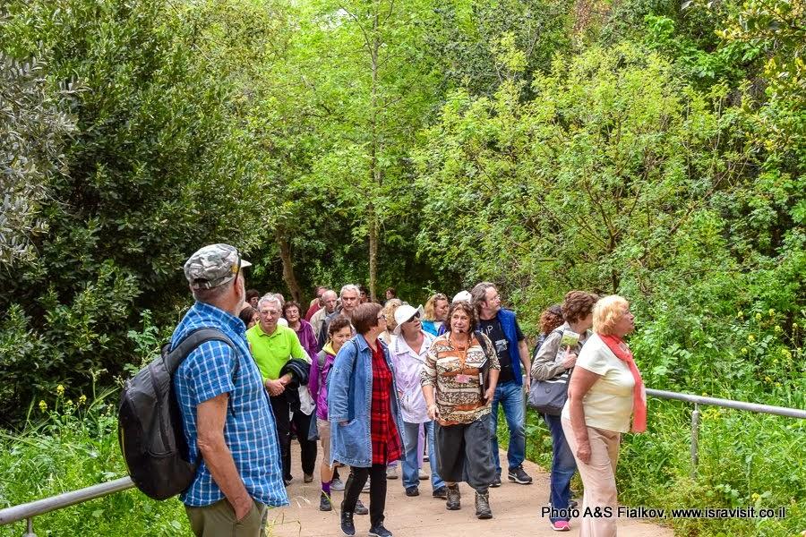 Экскурсия на Голанские высоты с гидом в Израиле Светланой Фиалковой. Тель Дан.