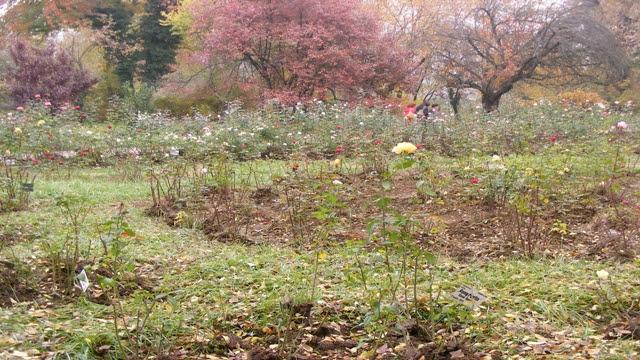 Inside Botanical Garden of Bucharest