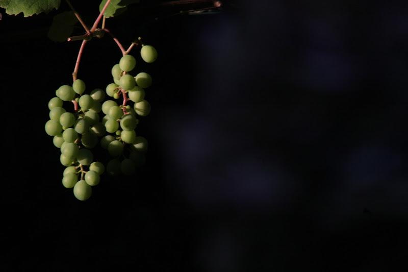 Uva nel buio di clpss