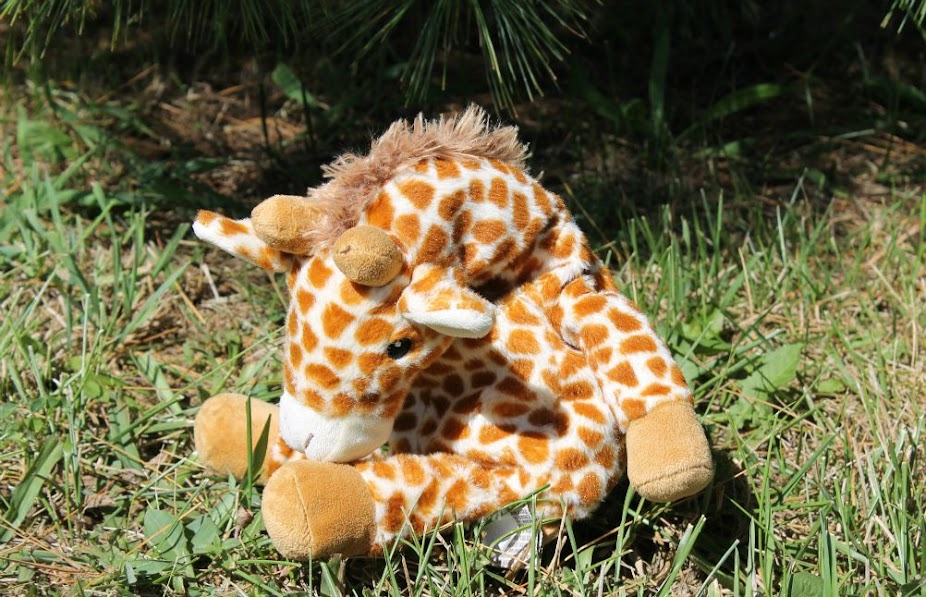 One fun idea for a backyard safari is to hide jungle animals around your backyard, like this cute giraffe