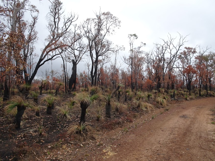 What the forest looks like after a prescribed burn