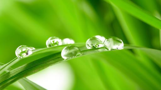Water Drops Leaf Wallpaper