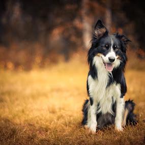 Freke by Jon-Eirik Boholm - Animals - Dogs Portraits (  )