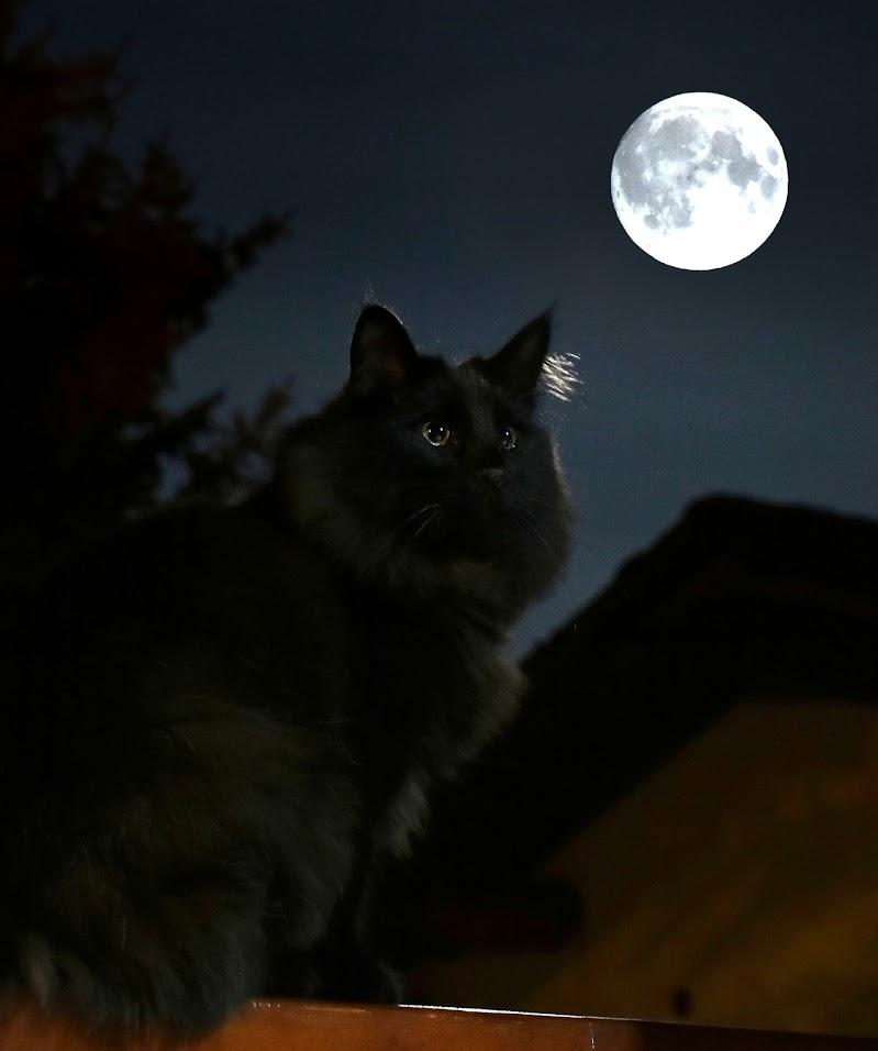 Il micio e la luna. di gigidueelle