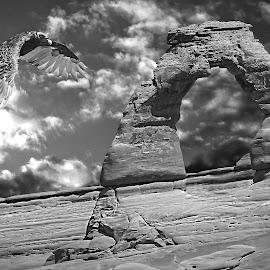 Vultur at Arches NP by Gérard CHATENET - Black & White Landscapes
