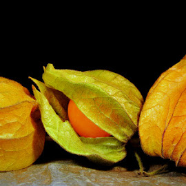 3 PHYSALIS  by Karen Tucker - Food & Drink Fruits & Vegetables ( macro, black background, cape gooseberries, fruit, healthy food, three of a kind, physalis )