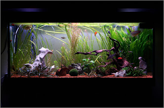 Photo: Almost an year passed since I started to have this aquarium