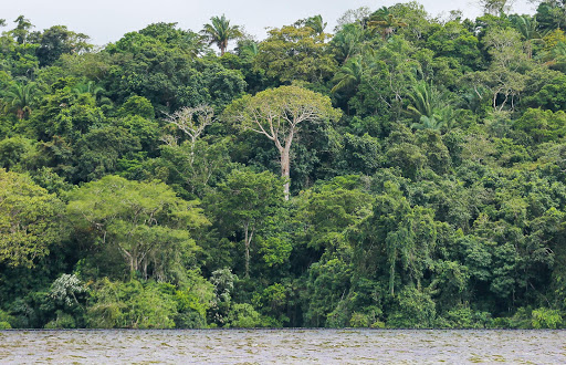 Gamboa-rainforest-in-Panama2.jpg - View of the Gamboa rainforest along Gatun Lake in Panama.