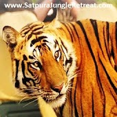 Satpura Tiger Park