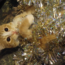Tinsel Toes by Jessica Rose - Animals - Cats Playing ( pets, mischievous, kitten, cat, christmas,  )