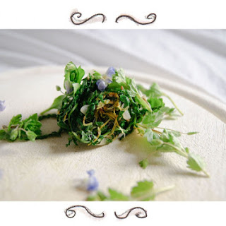 Wild Herbs – Yarrow, Speedwell And Dandelion For Lunch!