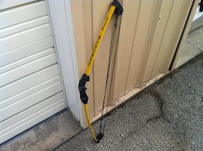 Photo: Lil Banshee compound yellow bow
