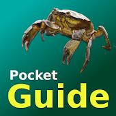Pocket Guide UK Sea Fish Bait