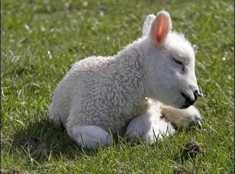 The Lamb Recipe